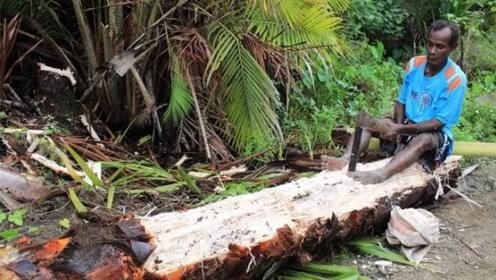 """最不正经的椰子树,不产椰子却产""""大米"""",还养活数百万人"""
