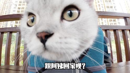 猫咪塔可又出门被围观,一开口却把人全吓跑,咋回事?