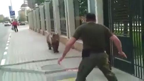 棕熊越狱出逃,被男子一脚踢到墙上,棕熊:我不要面子啊