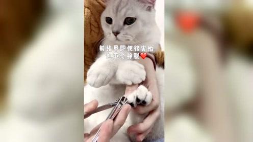 你们家的猫眼里有你吗?