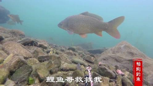 用小鱼钓大鱼,水下相机带你领略水下世界