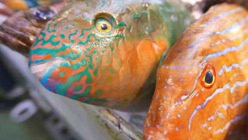 酒店后厨处理琳琅满目的彩虹鱼,这鱼不仅好看还好吃!
