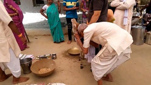 这种动物在印度泛滥成灾,却没人敢动它一根毫毛,过得比人还好