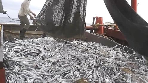 拖网渔船收网,看完就知道为什么拖网海鲜品相差了!