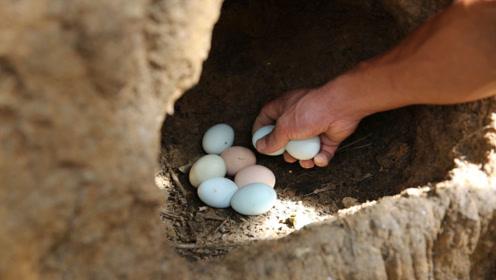 41岁男子山林里养跑山鸡,一个鸡蛋卖2元,不愁销