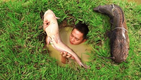 小哥在河边挖坑抓鱼,一抓一个准,太厉害了!