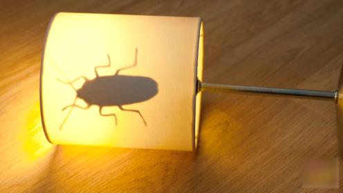 她自制蟑螂模型,闺蜜打开灯后直接吓了一跳,简直太坏了!