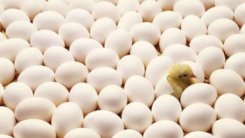 原来炸鸡店从不断货是这个原因,看完真是大开眼界!