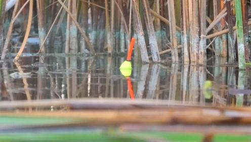 在这样的地方钓鱼,应该如何调漂?