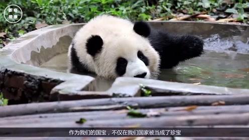 """熊猫无聊开始演戏:我溺水了!快来救我呀!日本游客:""""斯国一"""""""