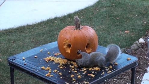 松鼠不愧是雕刻大师,看起来是在乱啃,最后成了一件笑脸艺术品