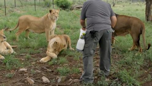 小伙坚持做二十年饲养员,没时间谈恋爱,他的恋人是整个动物园