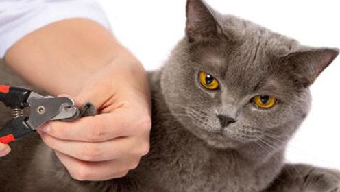猫咪去爪术到底是什么?爱猫请让猫咪远离这种手术!