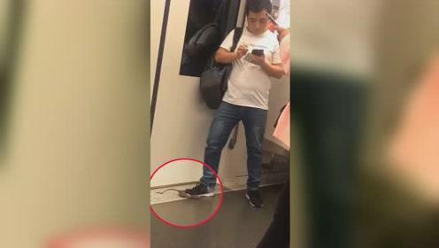 上海地铁10号线现淡定灭鼠哥 网友:高手在民间