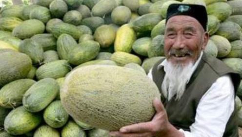 什么样的哈密瓜才香甜水分多?瓜农手把手教我挑哈密瓜小技巧