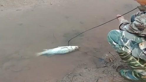 这哥们今天走了狗屎运,出门就捡了一条3斤的鲈鱼,真让人羡慕!