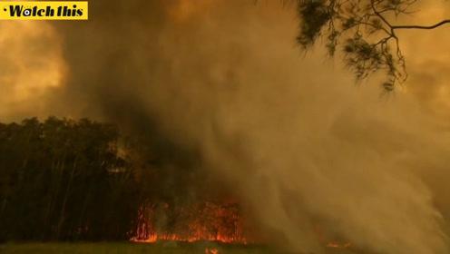 澳大利亚森林连发大火 当地居民直呼:像是世界末日一样