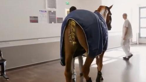 人和动物最坚定的友谊,一匹马跑去医院看主人,见面瞬间泪满目!