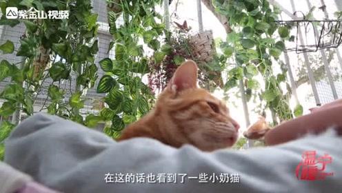 有爱!南京小夫妻开流浪猫咖啡馆:给流浪猫咪一个家!