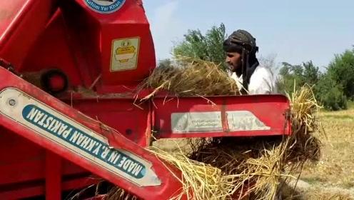 巴基斯坦农民的打谷机,很粗犷,效率极高!