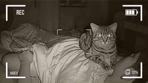 男子总感觉睡觉时有人盯着,安装摄像头后,发现搞笑的画面