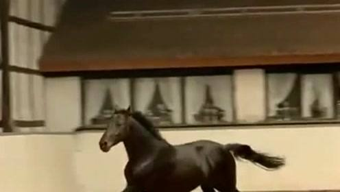 兄弟说这是一匹好马,我不是很相信,直到我看见这样一刻后才相信!