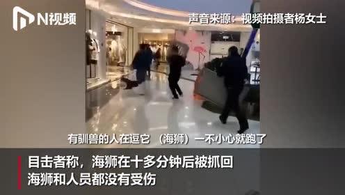 辽宁一商场海狮表演时逃跑,工作人员举筐围堵!被追回后继续表演
