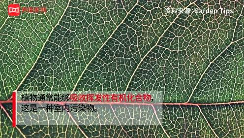 养草不如通风,研究指出室内绿植并不能有效净化空气