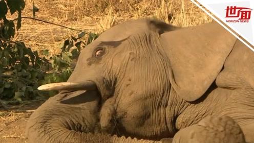 津巴布韦经历近年最严重干旱 国家公园中数百只动物奄奄一息