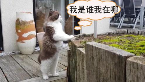 猫星人第一次出门,全程胆小如鼠,这个动作让主人大笑不止