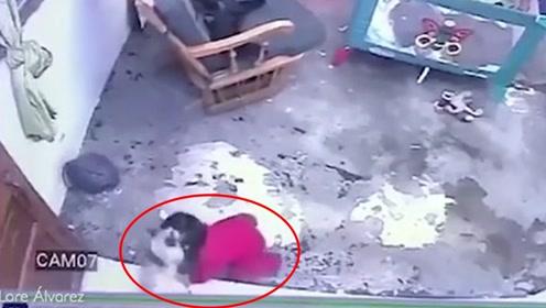 """""""喵星人""""单骑救主 男婴坠楼前一秒被猫咪死死顶住"""