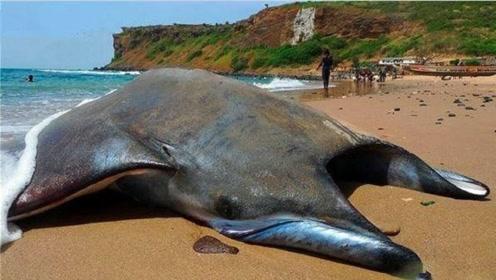 在海滩上发现一个未知海洋生物,检查后才了解身份,让人惋惜不已
