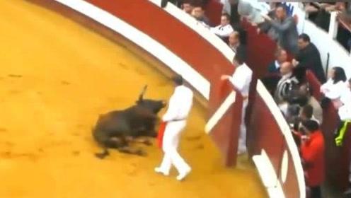 """世界上最""""刚""""的斗牛,一出场就撞墙:士可杀不可辱,全场都懵了!"""