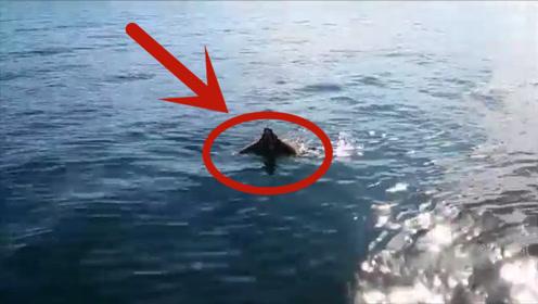 渔民出海捕鱼,突然发现海面上不太对,看清后果断停下船