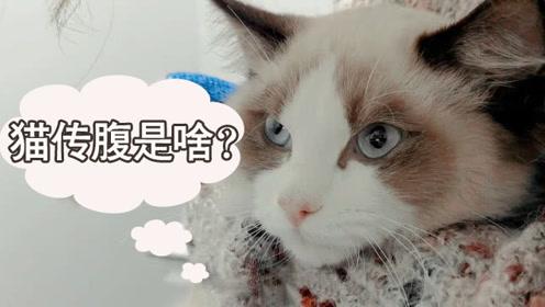 主人怀疑仙女猫扒垃圾吃坏肚子,送医院结果查出猫传腹,命真不好