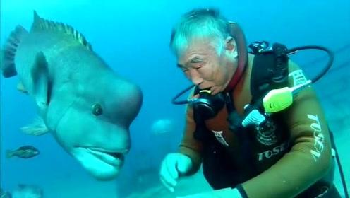 如果你和鱼有超过25年的交往,你就会发现鱼也是有感情的