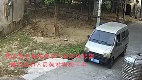 农村的偷狗贼越来越大胆!但为什么狗不咬偷狗贼?
