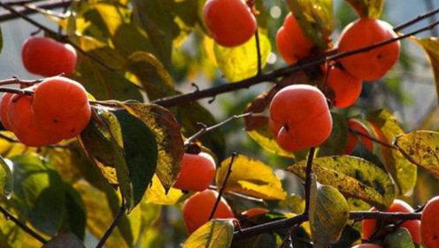 有一种水果,是高血压患者的福音,但却是糖尿病患者的噩梦!