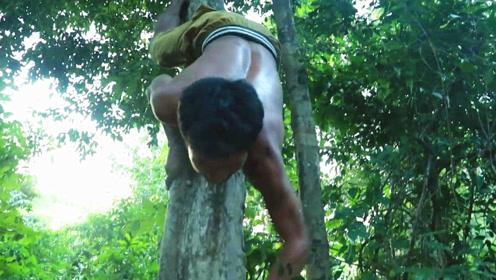 忽然看见深山大树上挂着诱人的野果,小伙立即爬树采摘,结果吃得真爽