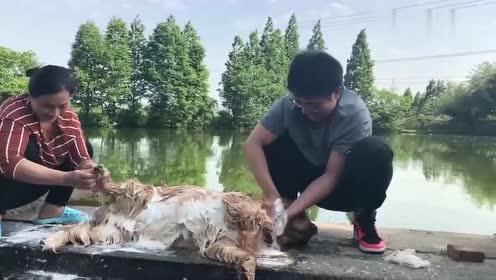 农村式洗狗,阿姨洗狗的动作,像极了我妈当年在水边洗衣服的样子