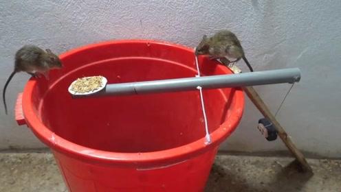 高手都在民间,男子用水桶自制捕鼠器,看看能抓多少老鼠?