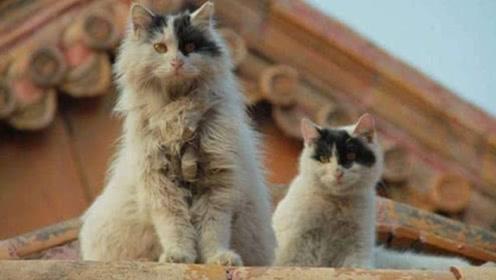 """北京故宫内100多只猫,没有一只吃白食,还被称为""""故宫保安""""!"""