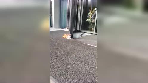 好奇心害死猫,酒店门口拍到这,原谅我没忍住!