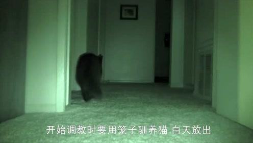 教你如何改掉猫咪夜间活动的坏习惯!镜头记录全过程