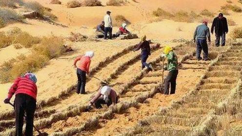 """世界上最没""""尊严""""的沙漠,被国人用来种植蔬菜,还收获了上万斤"""