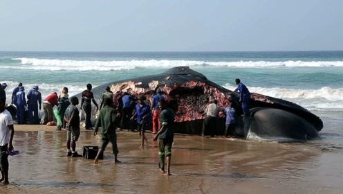 一头10吨重鲸鱼搁浅在海滩,非洲人一天将肉分光,镜头全程记录