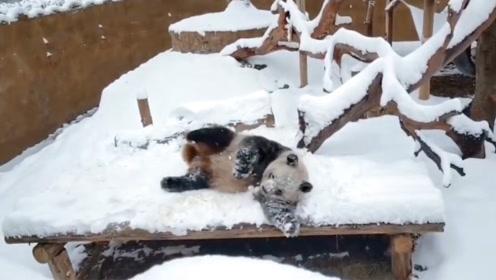 萌翻了!四川熊猫幼崽初次见到沈阳大雪竟激动地撒欢打滚