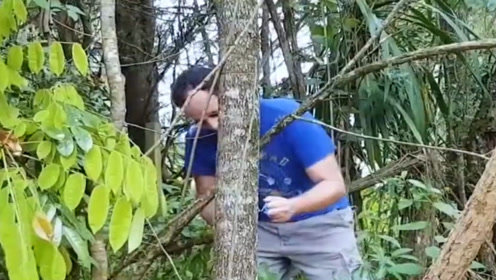 老外奇葩实验,2毫米的求生线能将大树锯断?结果让人不敢相信