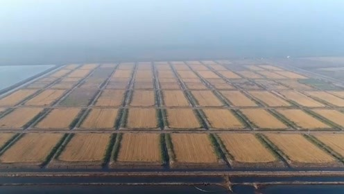 黑科技!中国科学家培养秘密武器,让盐碱地长出庄稼