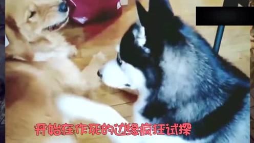 这些狗狗也太可爱了吧,这是怎么做到的?网友:这是成精了吗?